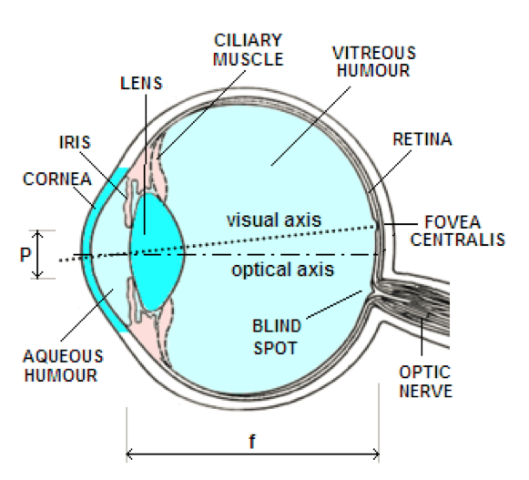 Light Eye And Vision Wikilectures